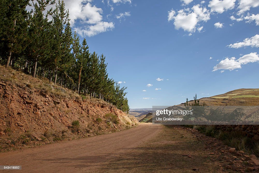 Forestation as a protection against soil erosion in the Andes : Nachrichtenfoto