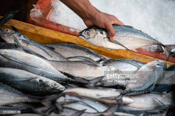 adding the last fish to a box of fish, yangoon fish market, myanmar - endopack stock pictures, royalty-free photos & images