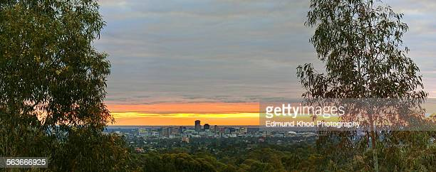 Adelaide panorama between two trees