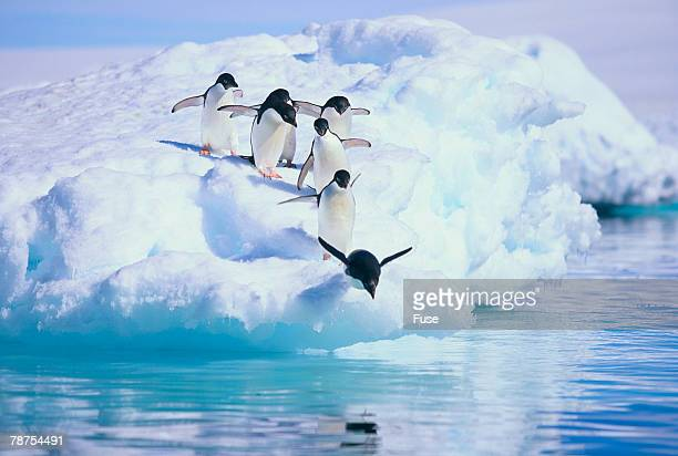 adelie penguin - adelie penguin stock pictures, royalty-free photos & images