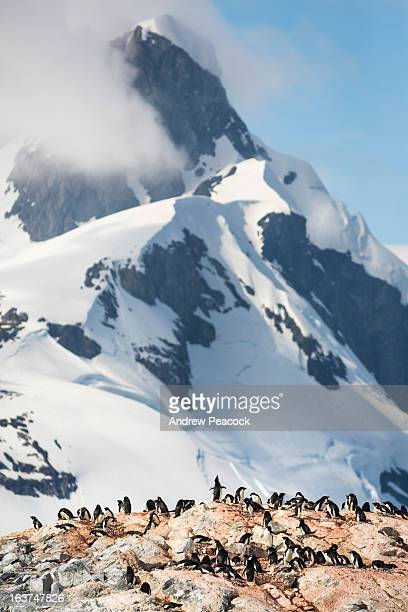 adelie penguin rookery, yalour islands - rookery stock pictures, royalty-free photos & images