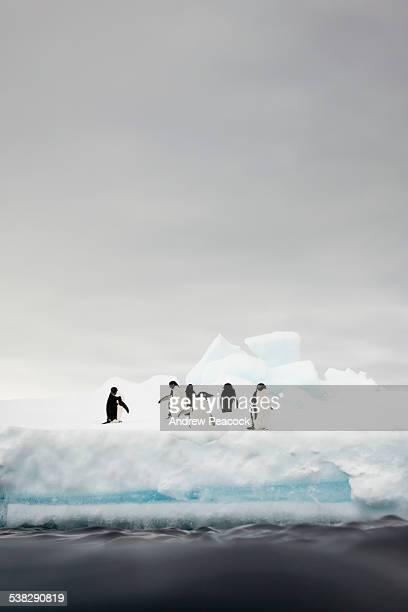 Adelie penguins, Antarctic Sound