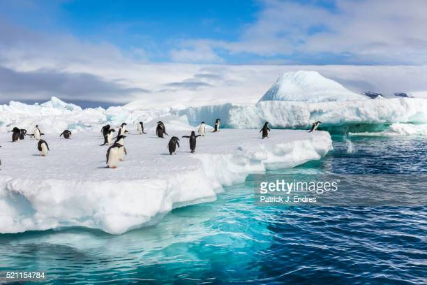 adelie penguins, antarctica - antarctic sound stock pictures, royalty-free photos & images