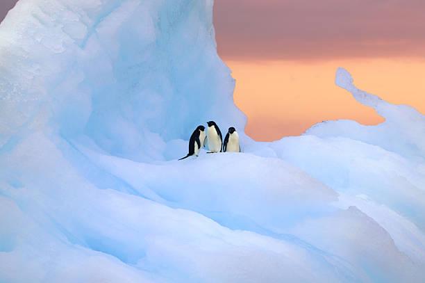 Adelie penguins on iceberg at sunrise