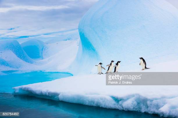 adelie penguins on iceberg - antarctic sound stock pictures, royalty-free photos & images