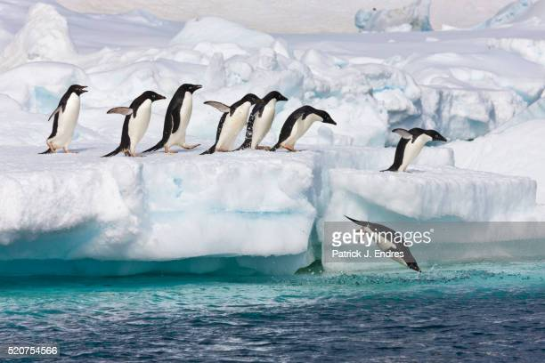 adelie penguins - antarctica stock pictures, royalty-free photos & images