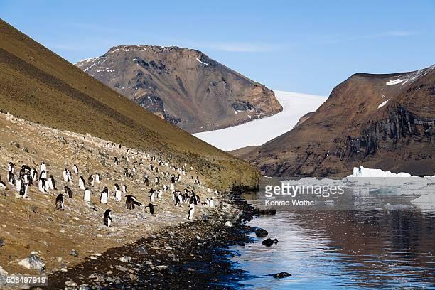 adelie penguins -pygoscelis adeliae-, devil island, weddell sea, southern ocean, antarctica - weddell sea - fotografias e filmes do acervo