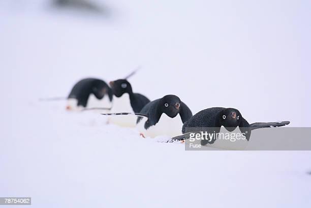 adelie penguins sliding downhill - wasserform stock-fotos und bilder