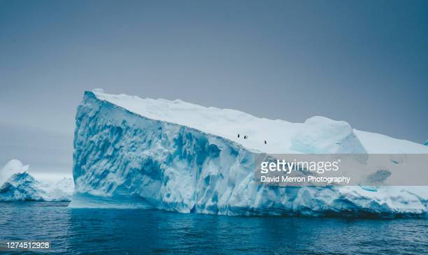 adelie penguins stands on top of iceberg in antarctica - 南極海峡 ストックフォトと画像