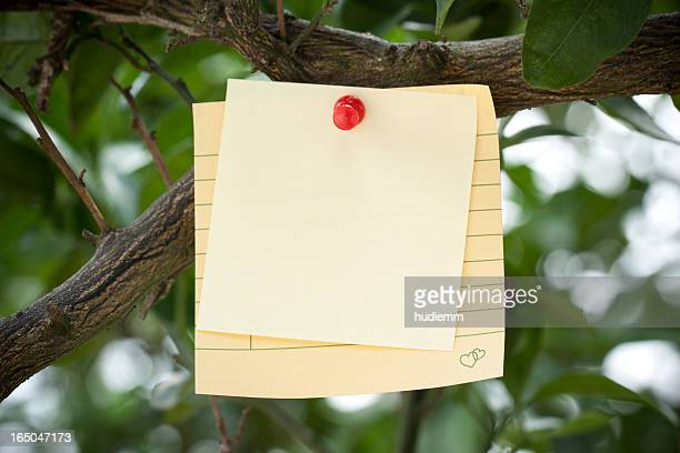 Adhesive Note on branch