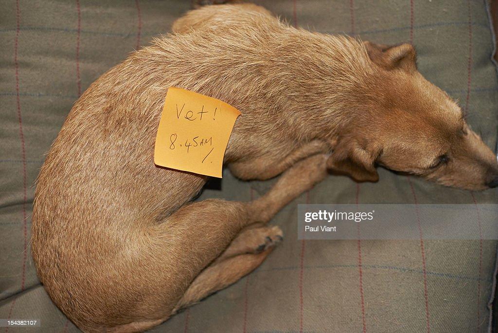 adhesive note on pet dog : Bildbanksbilder