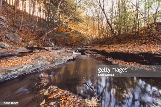 Adirondack Flowing Water Stream in Forest in Fall