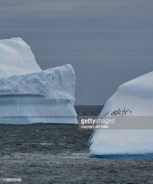 adélie penguins (pygoscelis adeliae) gathered on an iceberg, near davis station, southern ocean, antarctica - 南極海 ストックフォトと画像