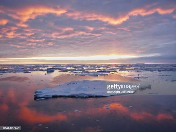 adélie penguins (pygoscelis adeliae)  on an iceberg surrounded by a red halo of clouds at sunset, southern ocean, antarctica. - pack ice stock pictures, royalty-free photos & images