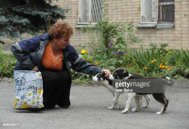 Administration worker Lyudmila Ivanovna greets stray puppies inside the exclusion zone at the Chernobyl nuclear power plant on August 18 2017 near...