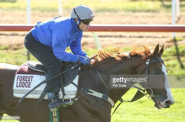 Admire Deus ridden by Craig Williams works at Werribee Racecourse on October 10 2017 in Werribee Australia
