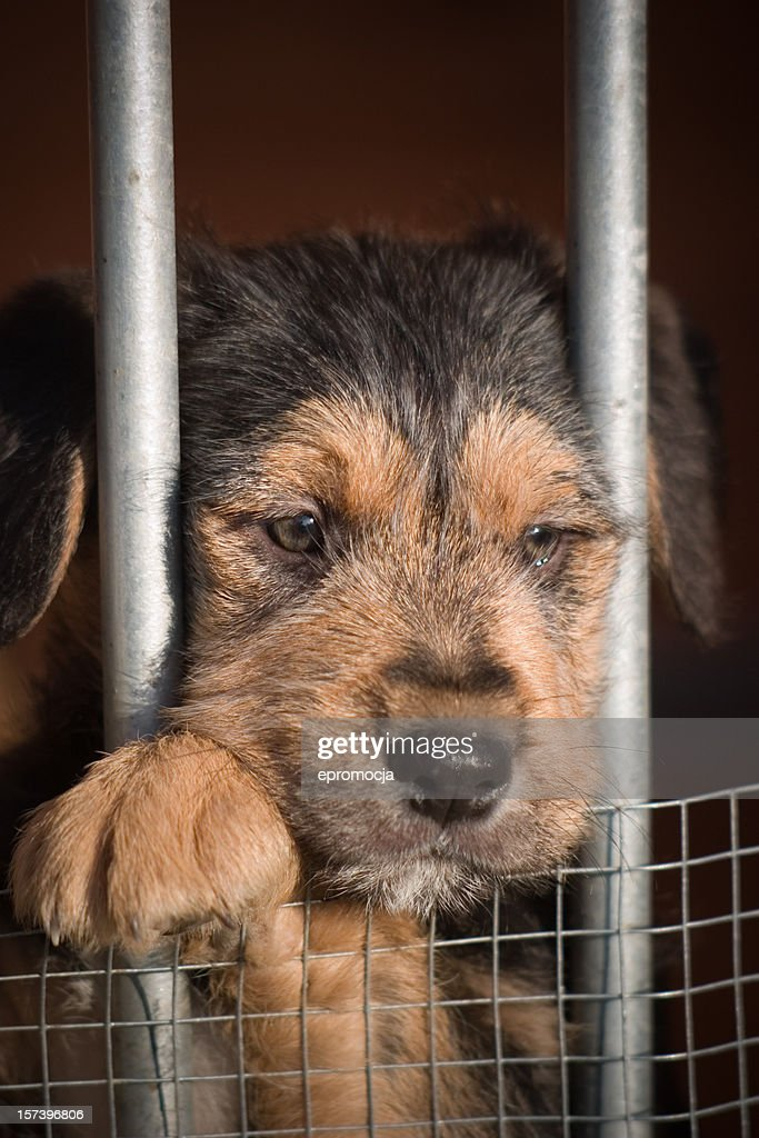 Adopt me please!! : Stock Photo