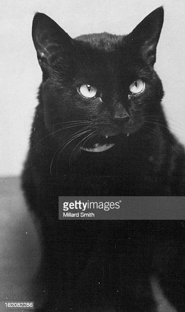MAR 21 1975 MAR 22 1975 Adoptable Shadow a black shorthaired neutered male cat loves children and is good with other cats The 1yearold housecat is up...