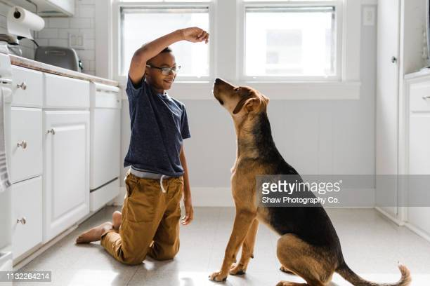 adopted african american boy with adopted dog - obedience training stock pictures, royalty-free photos & images