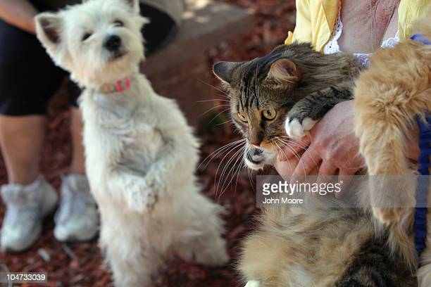 Adopted cat Newkie is eyed by a canine neighbor after being blessed by Presbyterian minister John Bell at a Blessing of the Animals service on...