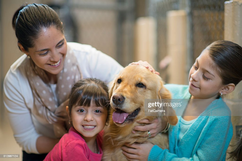 Adopting a Dog at the Pound : Stock Photo