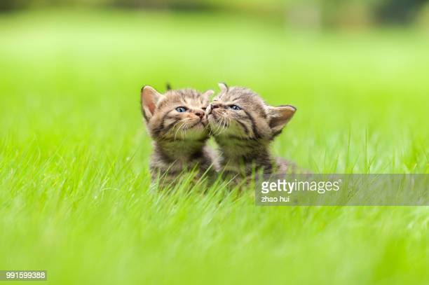 adoption instead of buying - kitten stock pictures, royalty-free photos & images