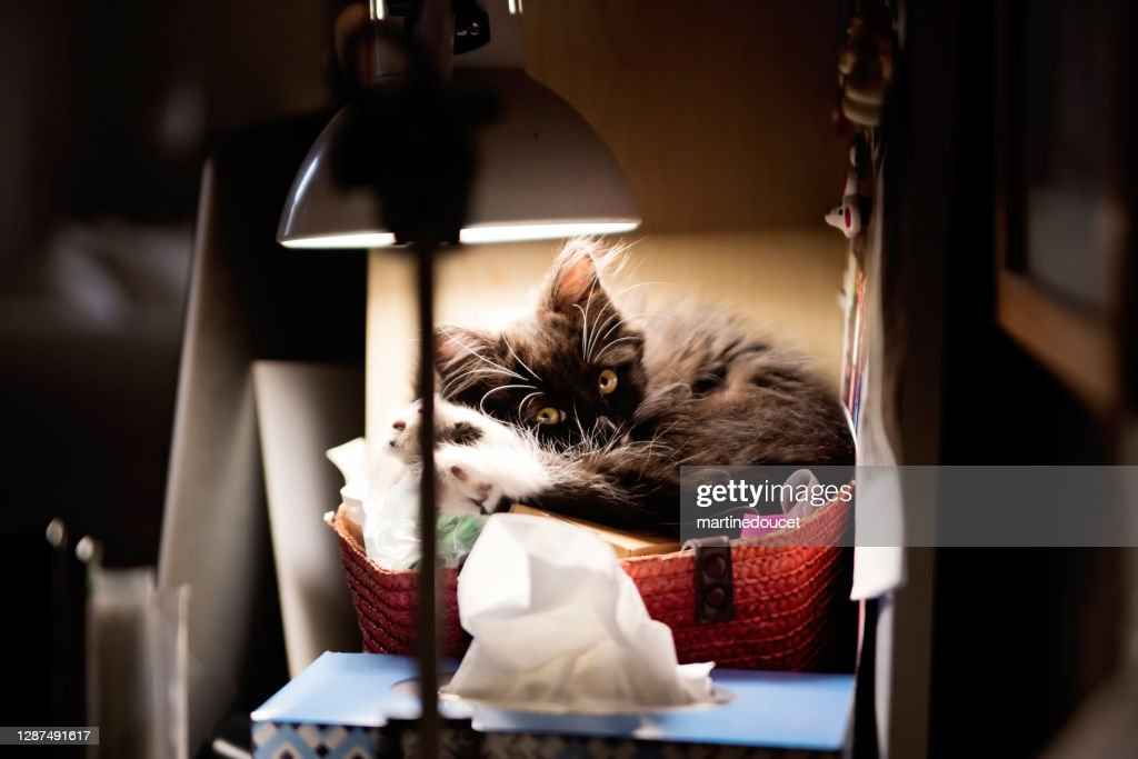 Adorable 3 months kitten resting in an akward place. : Stock Photo