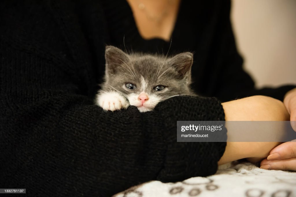 Adorable 5 weeks kitten in young woman's arms. : Stock Photo