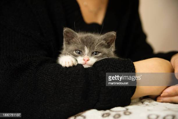 """adorable 5 weeks kitten in young woman's arms. - """"martine doucet"""" or martinedoucet stock pictures, royalty-free photos & images"""