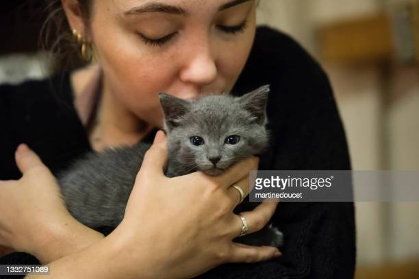 """adorable 5 weeks kitten in young woman's hands. - """"martine doucet"""" or martinedoucet stock pictures, royalty-free photos & images"""