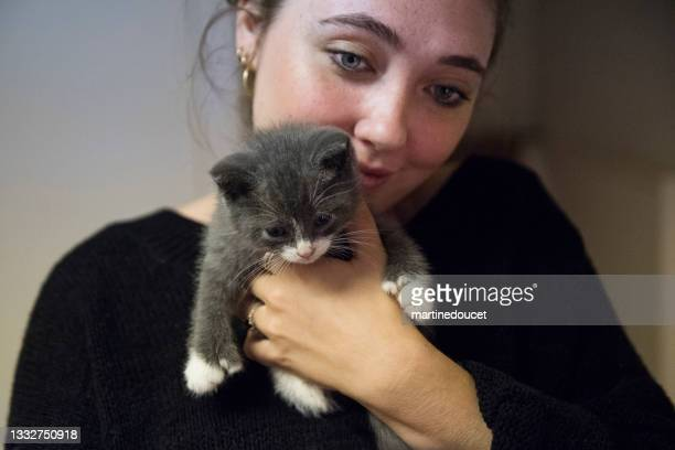"""adorable 5 weeks polydactyl kitten in young woman's arms. - """"martine doucet"""" or martinedoucet stock pictures, royalty-free photos & images"""