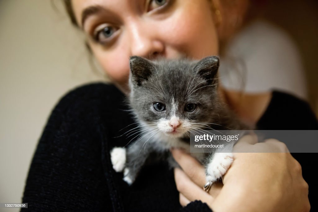 Adorable 5 weeks polydactyl kitten in young woman's arms. : Stock Photo