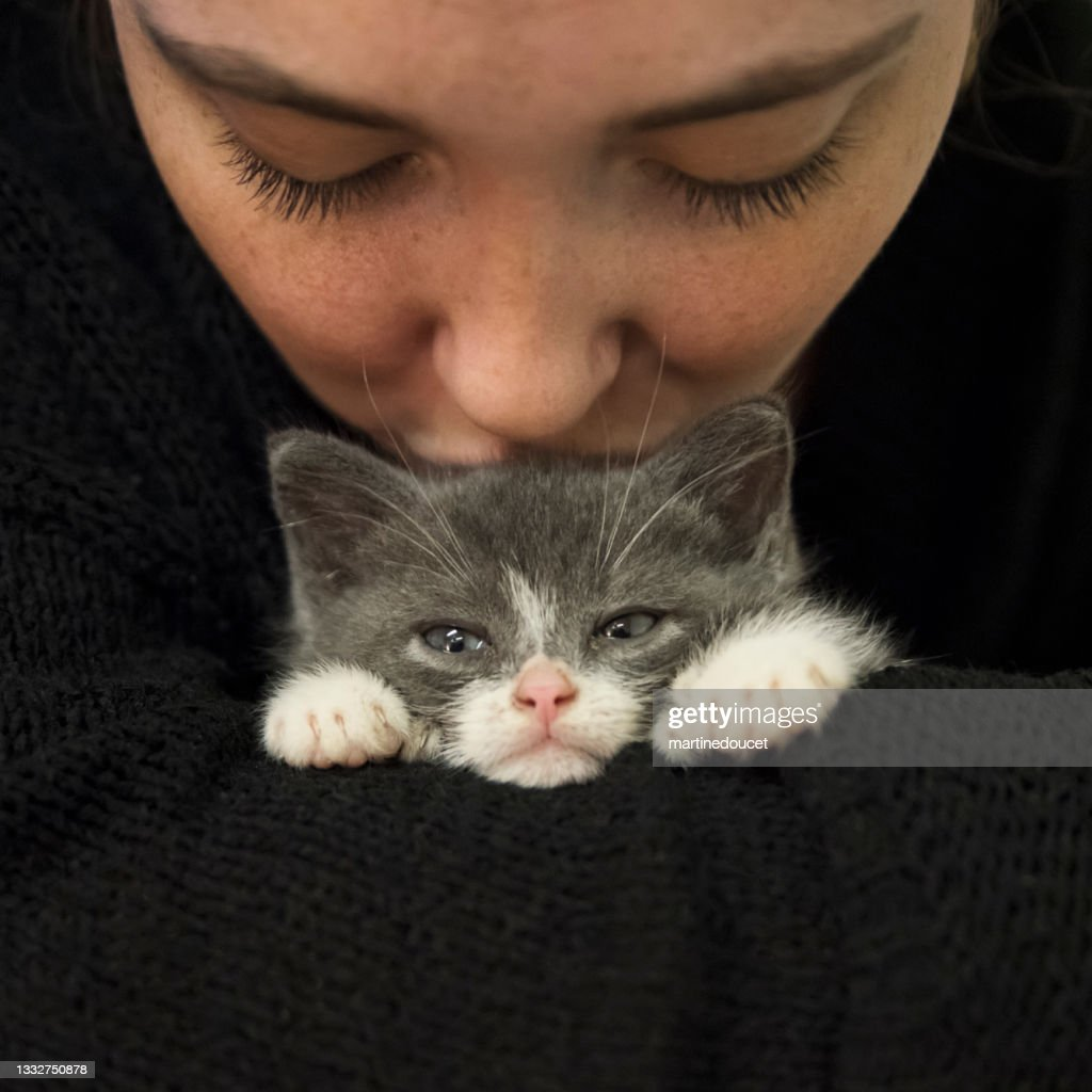 Adorable 5 weeks polydactyl kitten kissed by young woman. : Stock Photo