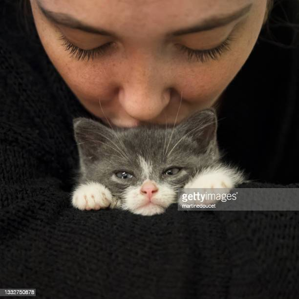 """adorable 5 weeks polydactyl kitten kissed by young woman. - """"martine doucet"""" or martinedoucet imagens e fotografias de stock"""