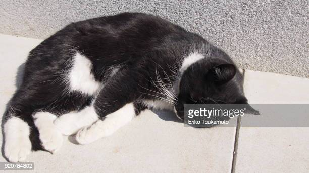 Adorable bicolor cat napping