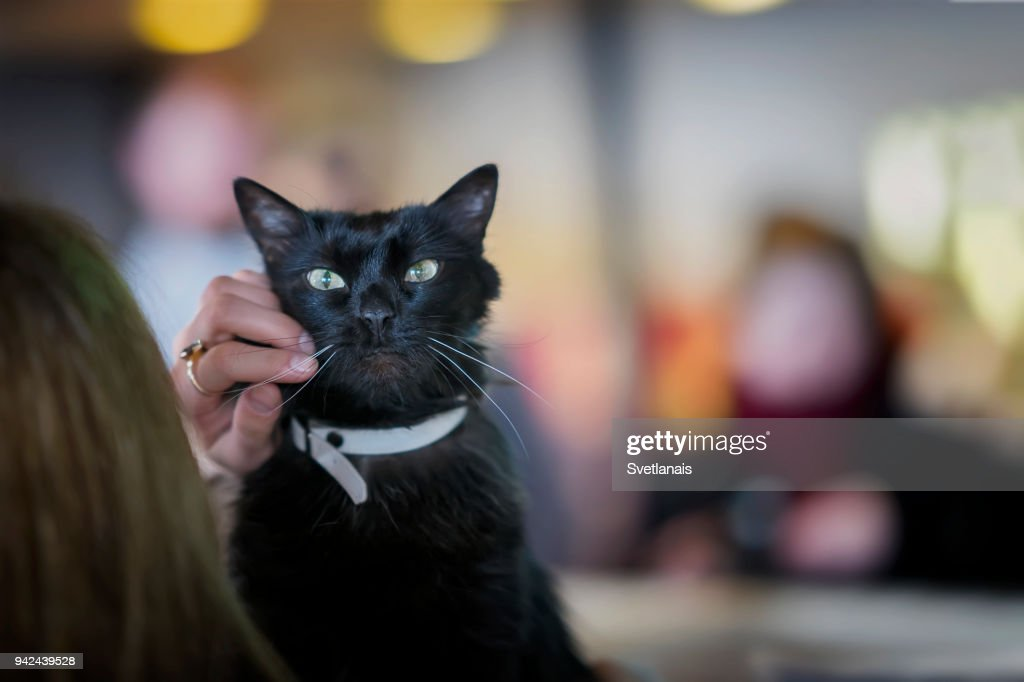 Adorable black cat with beautiful green eyes in the hands of girl volunteer, in shelter for homeless animals waiting for home : Stock Photo