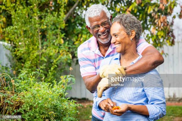 adorable black couple working together in the garden - african american couple stock pictures, royalty-free photos & images