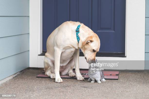 Adorable bunny and medium-size dog hanging out together on front porch