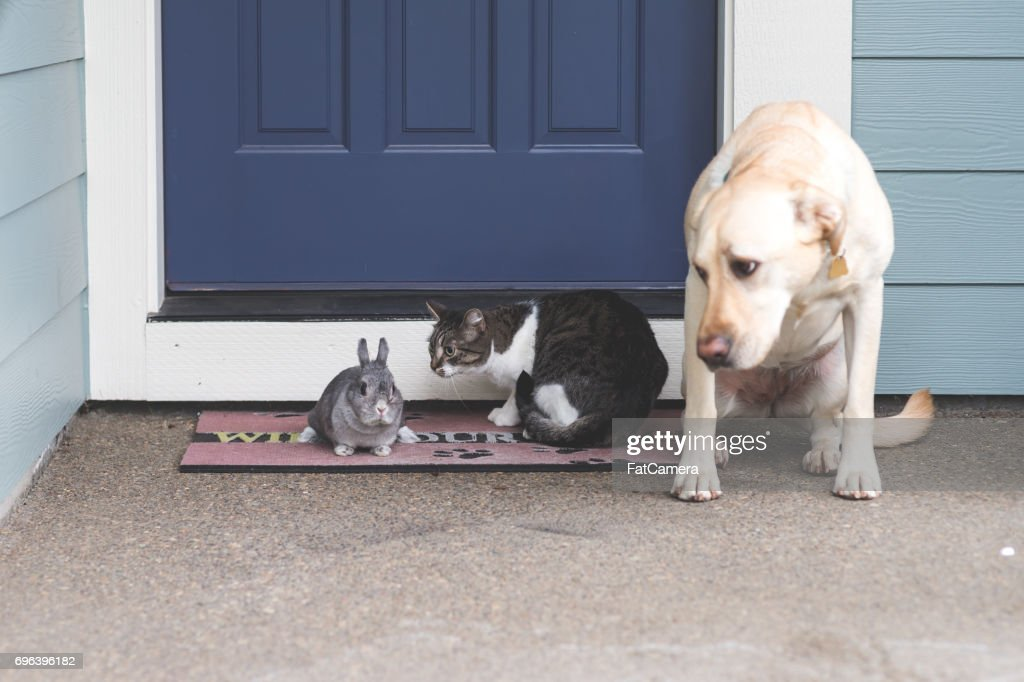 Adorable bunny medium-size dog, and cat hanging out together on front porch : Stock Photo