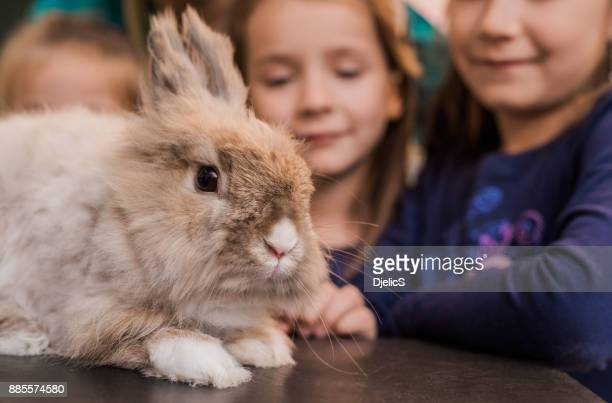 adorable bunny on the visit to the vet. - rabbit stock pictures, royalty-free photos & images