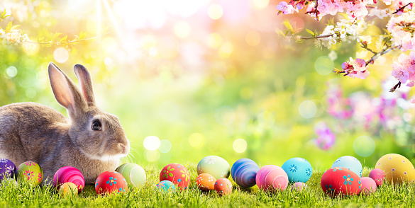 Adorable Bunny With Easter Eggs In Flowery Meadow 1132297264