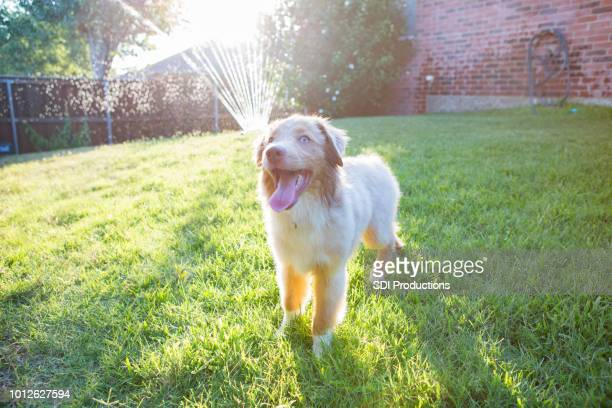 adorable dog in the back yard - panting stock pictures, royalty-free photos & images