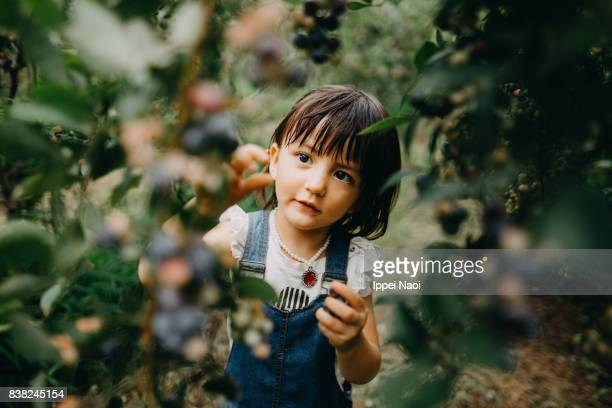 adorable little girl picking blueberries, tochigi, japan - foco diferencial imagens e fotografias de stock