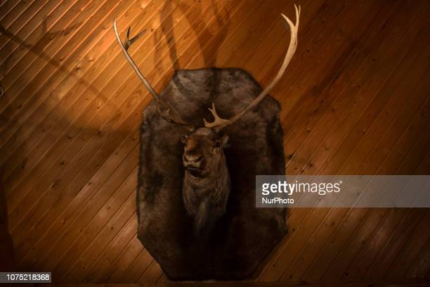 Adornment of a head of Reno in a Vikingstyle restaurant in Hafnarjdördur very close to Reykjavik in Iceland