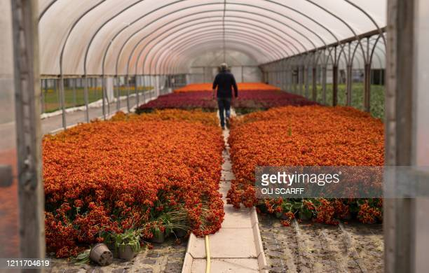 26 297 Plant Nursery Worker Photos And