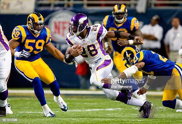 Adrian Peterson of the Minnesota Vikings runs for yardage during their NFL game against the St Louis Rams at the Edward Jones Dome on October 11 2009...