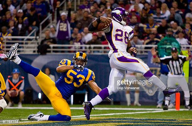 Adrian Peterson of the Minnesota Vikings scores a touchdown against Paris Lenon of the St Louis Rams at the Edward Jones Dome on October 11 2009 in...