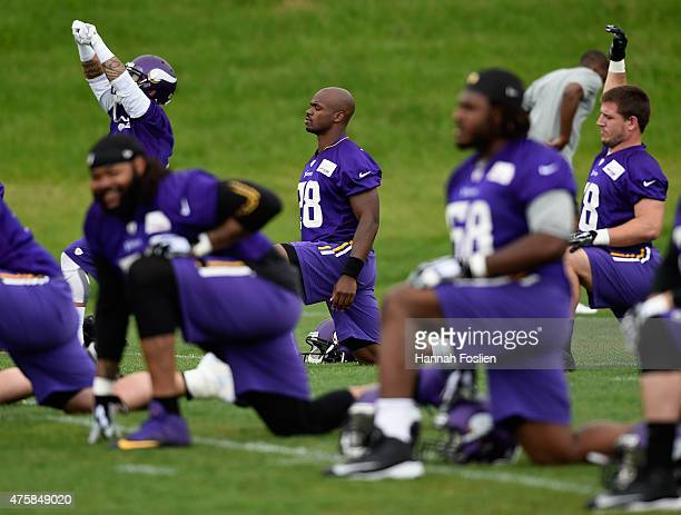 Adrian Peterson of the Minnesota Vikings stretches during practice on June 4 2015 at Winter Park in Eden Prairie Minnesota