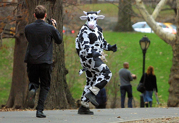 Cow in New York City