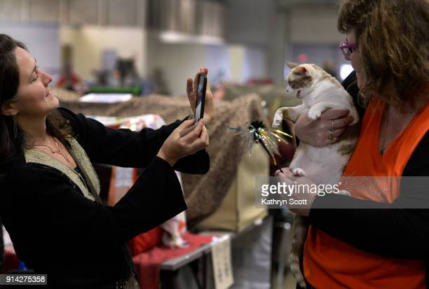 Adriane Laws left snaps a photo of Deja Roo a Devon Rex chocolate mink tortie and white with owner Dolly Chamness during the Econo Cat Club's third...